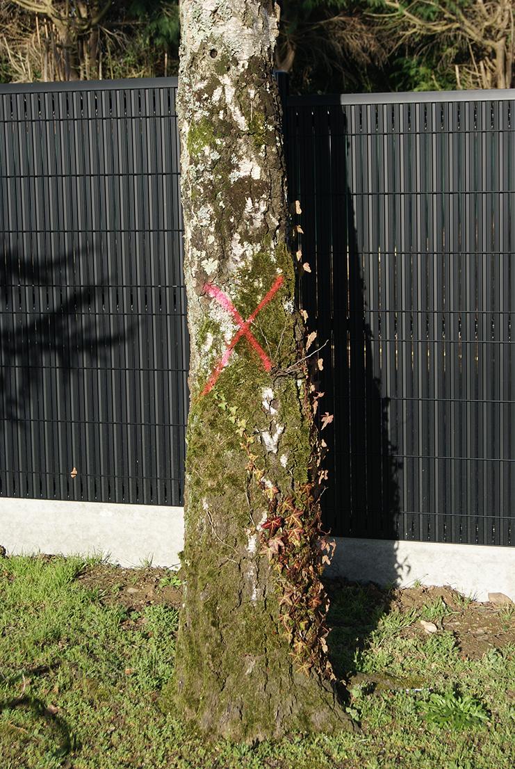 Abattage Jardins des 4 saisons