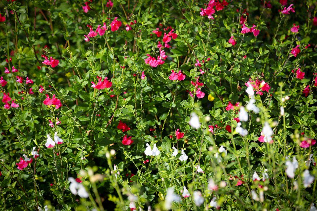 Jardins des 4 Saisons. Guer, Ploërmel, Redon, Plélan-Le-Grand, Maure de Bretagne