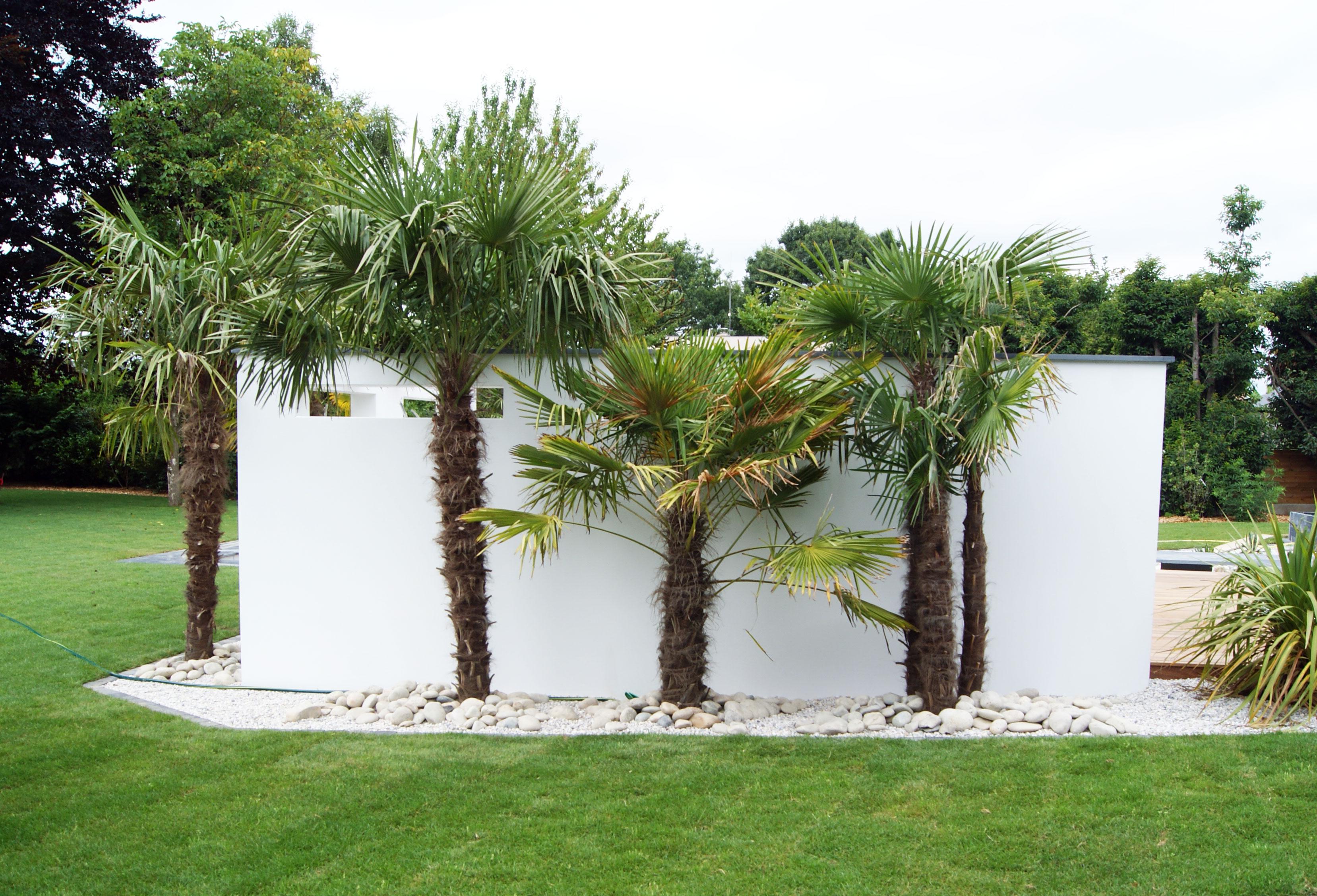 Massif exotique. Palmier. Jardin Exotique. Jardin Contemporain. Abords piscines. Jardins des 4 Saisons. Guer, Ploërmel, Redon, Plélan-Le-Grand, Maure de Bretagne