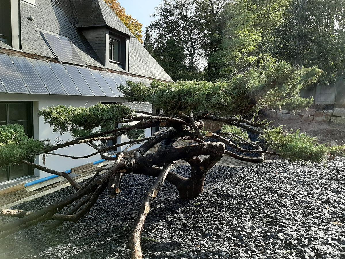 Suite reportage chantier boisé. Topiaire. Taille. Jardins des 4 Saisons. Guer, Ploërmel, Redon, Plélan-Le-Grand, Maure de Bretagne